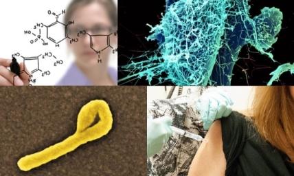 Ebola virus and development of therapeutics
