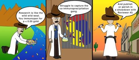 Wild Wild West(ern Blot)