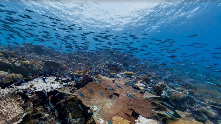 Google_underwater_Street_View