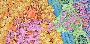 David Goodsell's painting of the cell nucleus David Goodsell's painting of the cell nucleus Photograph: David Goodsell/http://mgl.scripps.edu/people/goodsell/