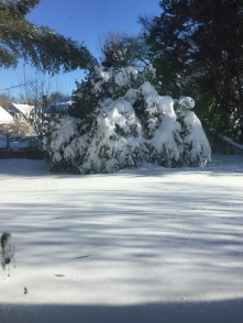 My backyard, over 2ft of snow!
